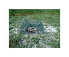 Róka csapda - rókakölyköknek-élvefogó-4 fogórekeszes