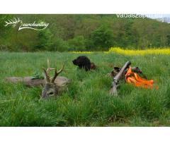 Őzbakvadászat