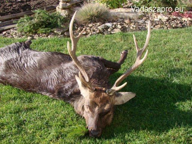 Japán szika és muflon vadászat Csehországban 2019-ben is