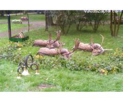 Dámbika vadászat 2018