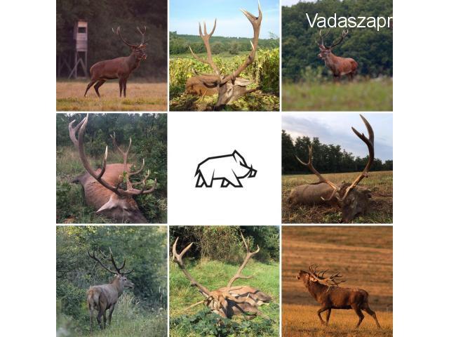 Gímbika vadászat 2018