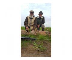 Őzbakvadászat Romániában nagyon kedvező áron
