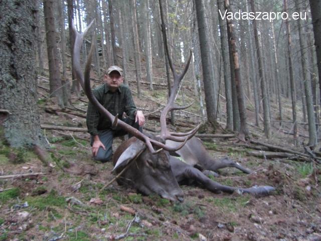 kárpáti szarvasbika vadászata Romániában