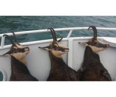 Zergevadászat hajóról