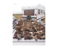 Fürj vadászat Erdélyben , a Bánságban és Regátban