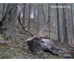 Kárpáti szarvasbika vadászat