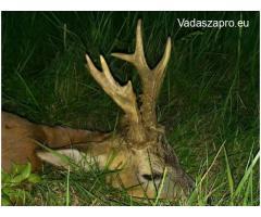 Őzbak és tarvad vadászat