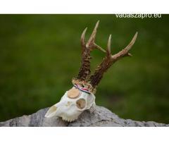 Őzbak (300gr. felett) vadászat