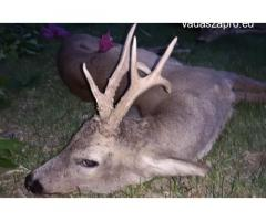 Őzbak vadászat a díjnyertes Cserkeszőlőn